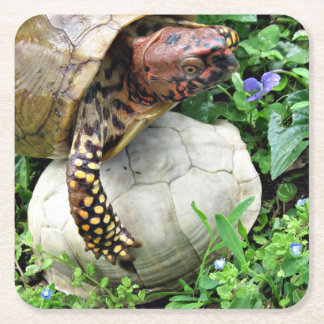 Turtle Protecting Turtle Shell Square Paper Coaster