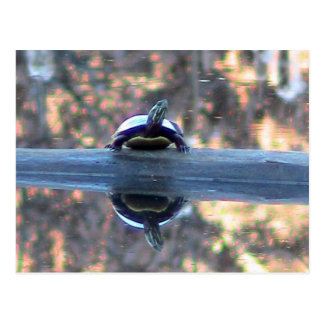 Turtle Reflected in Pond Postcard