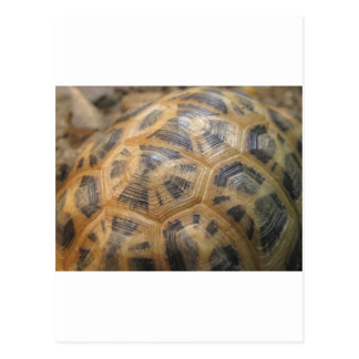 Turtle Shell Postcards