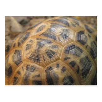 Turtle Shell Post Card