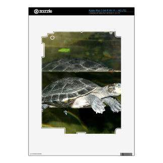 Turtle iPad 3 Decal