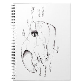 Turtle Skull Diagram Spiral Notebooks