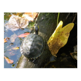 Turtle Soaking Up Sunshine Postcard