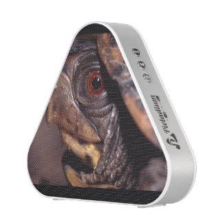 turtle speaker