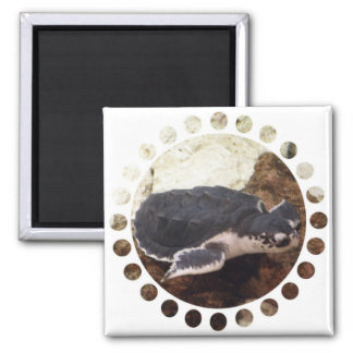 Turtle Square Magnet Magnets