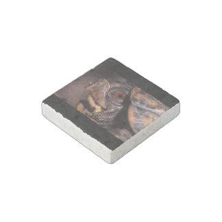 turtle stone magnet