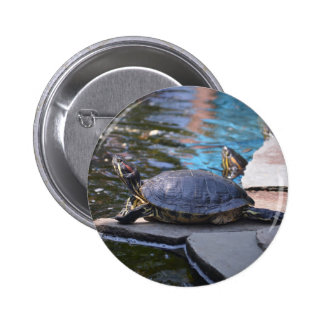 turtle sunning himelf pins