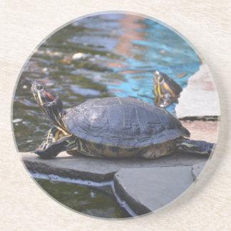 turtle sunning himelf sandstone coaster