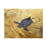 Turtle Swimming in Golden Waters Canvas Print