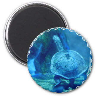 Turtle Swimming Underwater Magnet Magnets