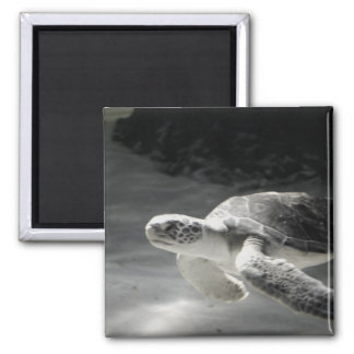 Turtle Tank 2 Inch Square Magnet