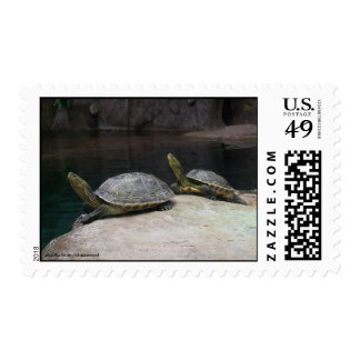 turtle tortue stamp