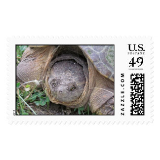 Turtle USA Forever Postage Stamp