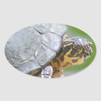 Turtle with Hard Shell Oval Sticker