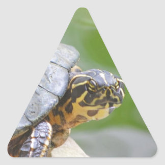 Turtle with Hard Shell Triangle Sticker