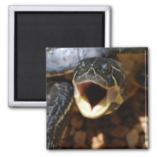 Turtle with Mouth Open Magnet Magnets