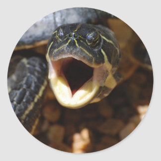 Turtle with Mouth Open Stickers