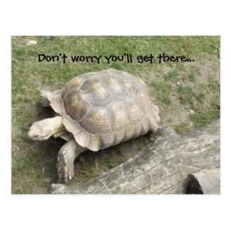 Turtle with Saying Postcard