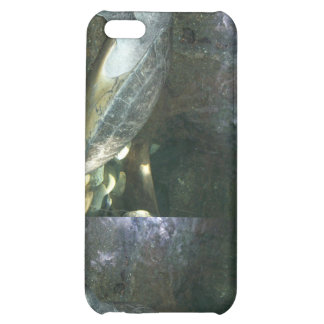 Turtle Zoo Case For iPhone 5C