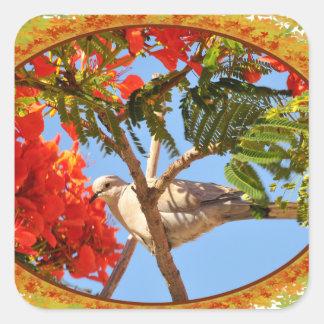 Turtledove en un árbol floreciente en el marco de pegatina cuadrada