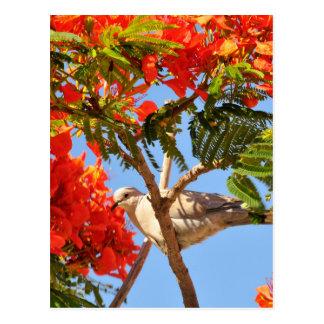 Turtledove in a flowering tree postcard