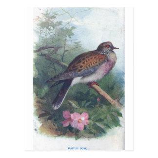 turtledove postcard