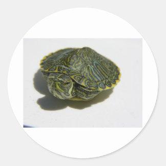 turtlemini.jpg round stickers