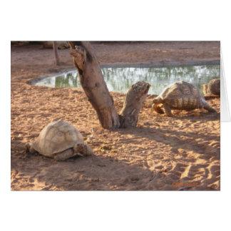 Turtles 3 card