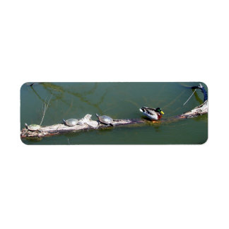 Turtles and Duck Custom Return Address Labels