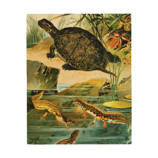 Turtles and Newts Vintage Drawing Wood Wall Art
