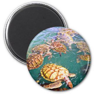 Turtles at Play Magnet