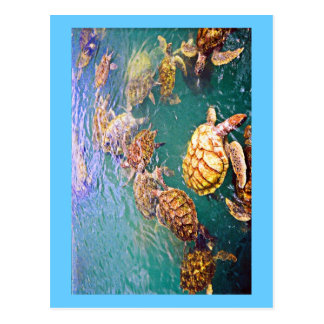 Turtles at Play Post Card