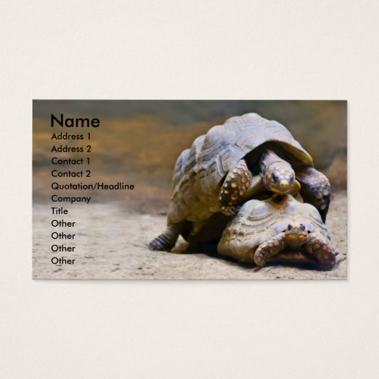 Turtles Business Card