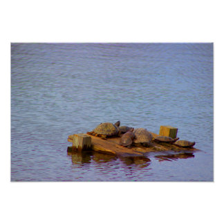 Turtles by the Water Poster