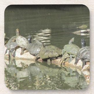 Turtles Coasters