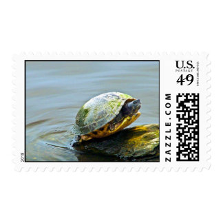 Turtle's Entrance Postage