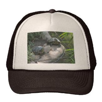 Turtles Trucker Hat