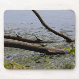 Turtles I Mouse Pad