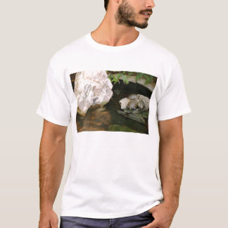 Turtles in a pond T-Shirt