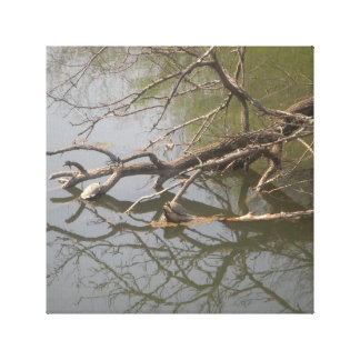 Turtles Laying Out Canvas Print