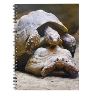Turtles Note Books