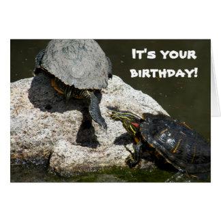 Turtles Photo Funny Birthday Card