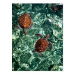 Turtles Post Cards