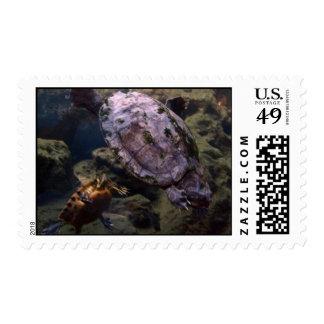 Turtles Postage Stamp