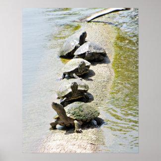 Turtles! Poster