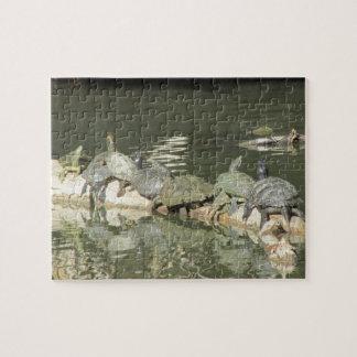 Turtles Puzzle