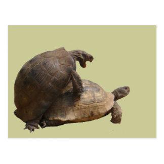 Turtley Awesome Postcard