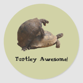 Turtley Awesome Round Stickers