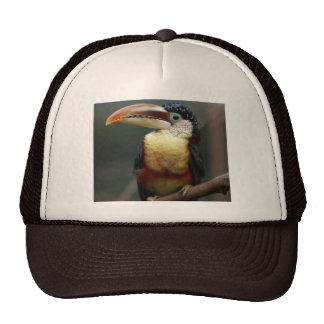 Tuscan  At The Zoo Trucker Hat