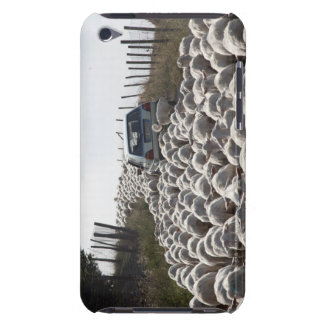 tuscany farmland road, car blocked by herd of barely there iPod cases